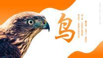 人教版八年级生物上册第一章第六节鸟PPT课件.pptx